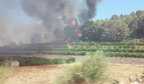 Controlado el incendio junto al Marjal de Pego