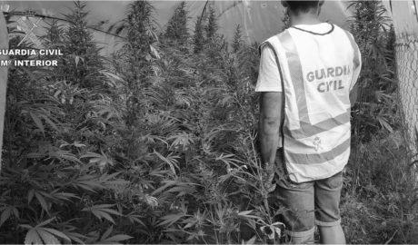 Una manguera permite descubrir una plantación de marihuana en Pedreguer