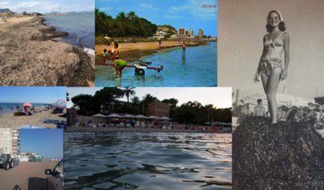 La batalla entre turistas y autóctonos en las redes sociales de Dénia