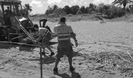 Dénia recoge 1.500 toneladas de posidonia de sus playas por las noches
