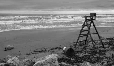 Dénia ya ha retirado unas mil toneladas de posidonia de sus playas