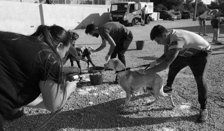 Benissa limpia a fondo la perrera de la protectora tras la detección de un virus contagioso