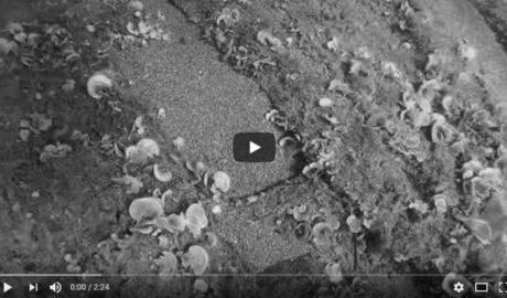 [VÍDEO] El descubrimiento del buque corsario Zéphir en Dénia