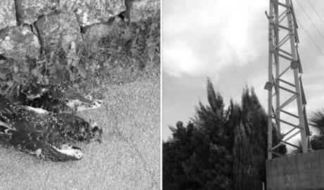 Torres elèctriques contra àguiles pescadores a Dénia