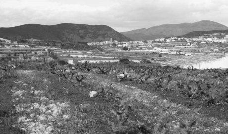 Teulada impulsa un Banc de Terres per reactivar l'agricultura