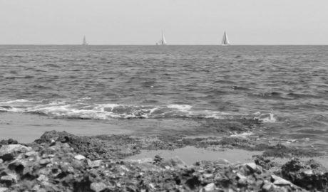 Una experta del CSIC alerta en Dénia de la mortandad en el Mediterráneo por el cambio climático