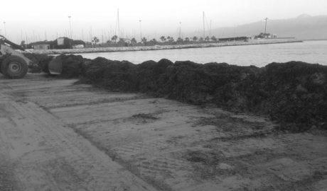 Dénia forma barreres de posidònia en les platges per frenar l'erosió