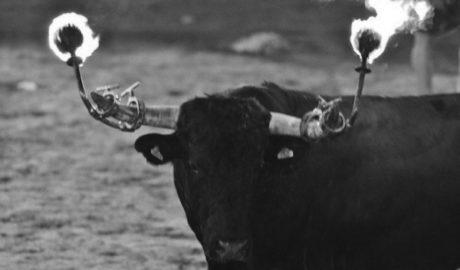 Senija diu 'Sí al bou embolat' per sis vots