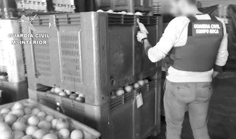 Detenidas 23 personas de una trama de falsificación de documentos agrícolas en la Marina Alta