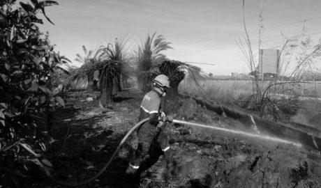 Arde un huerto de palmeras en El Verger