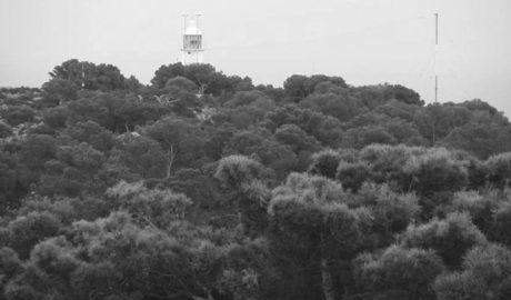 Preocupación entre los vecinos de Balcón al Mar de Xàbia por una plaga que amenaza a las pinadas
