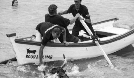 La Asociación contra el Maltrato vuelve a denunciar ante el juez los Bous a la Mar de Dénia