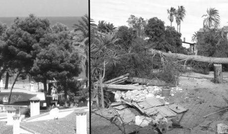 Dénia: Denuncian una gran tala de pinos como paso previo a la construcción de la urbanización Las Olas