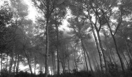 Legan a Jesús Pobre el Pinar de los Franceses, que será un parque público forestal junto al Montgó