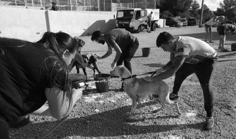 Benissa acoge el primer festival Adopta, destinado a la adopción de animales