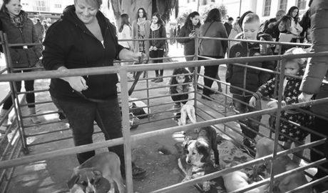 Quatres gossos troben família a Benissa en el primer Festival Adopta