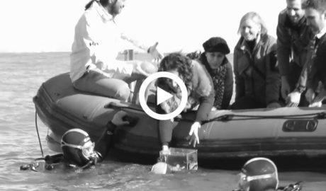 [VÍDEO] El Oceanogràfic suelta 20 crías de tiburón pintarroja capturadas en Xàbia