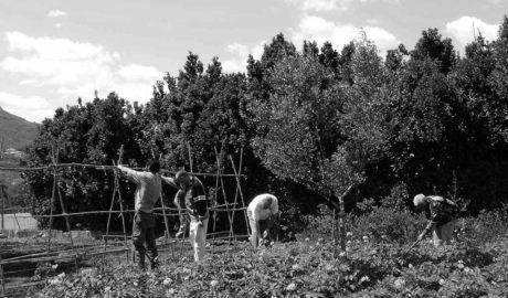 Arranca en Dénia el programa 'Agricultor formador'