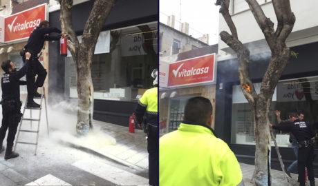 Otro susto en el centro de Dénia: arde un árbol frente al Mercat