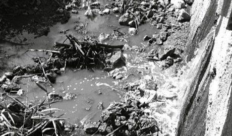Albiol denuncia en el Parlamento Europeo el vertido de aguas contaminadas en el Marjal de Pego