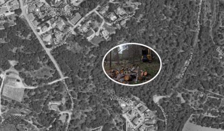 Denuncian una tala en la mayor pinada del entorno urbano de Calp